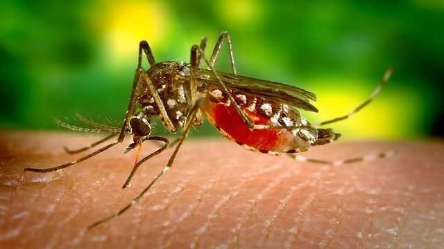 Do Mosquitoes Always Bite You? -Neuroscientists explore how they decide who to bite