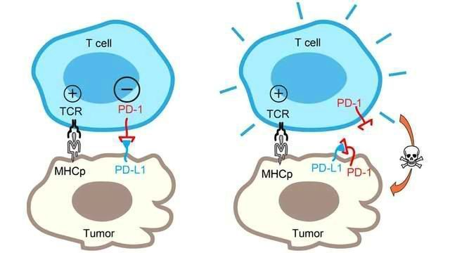 An Unexpected Twist in the Tumor Versus T Cell Battle