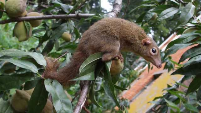 Some Like it Hot - Including Tree Shrews!