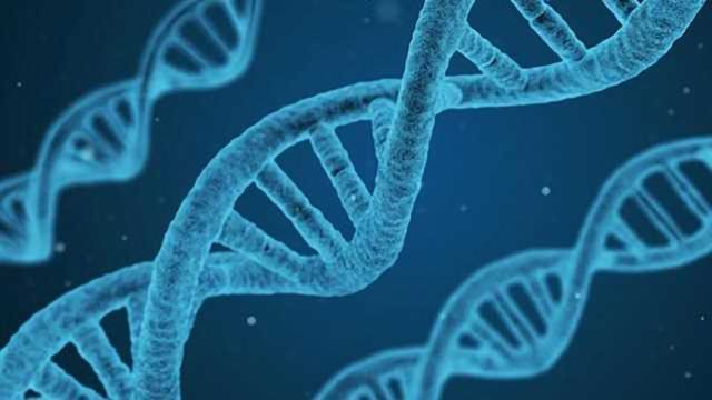 DNA 'Shield' Discovered with Crucial Roles in Normal Cell Division, the Immune System & Cancer