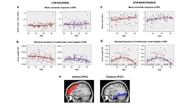 Increased Frontal Brain Activity with Age Indicates Reduced Brain Efficiency