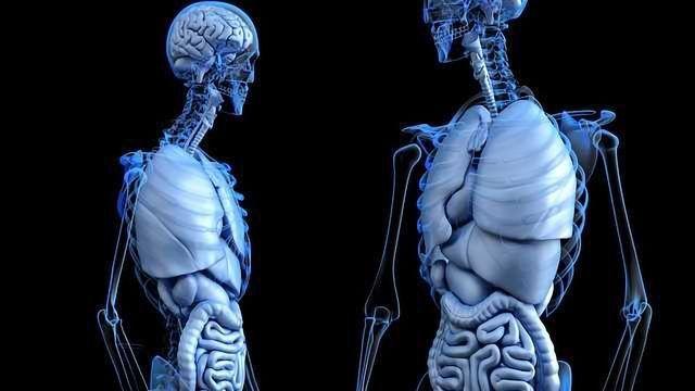 Gut-Liver-Brain Axis in Alzheimer's Explored