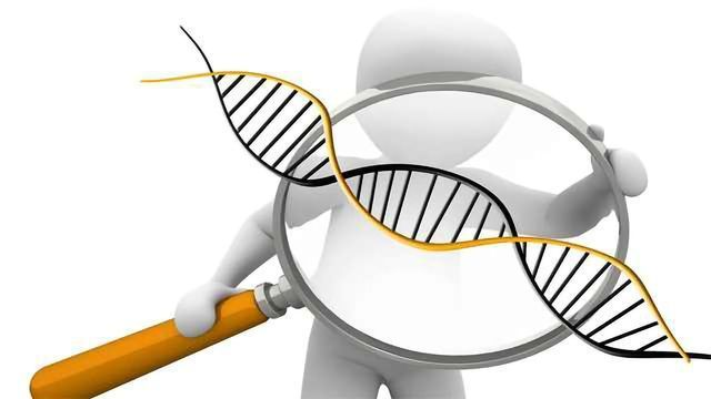 """Investigating the """"Mutational Burden"""" of Human Induced Pluripotent Stem Cells"""