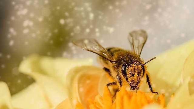 Bin the Bug Spray!