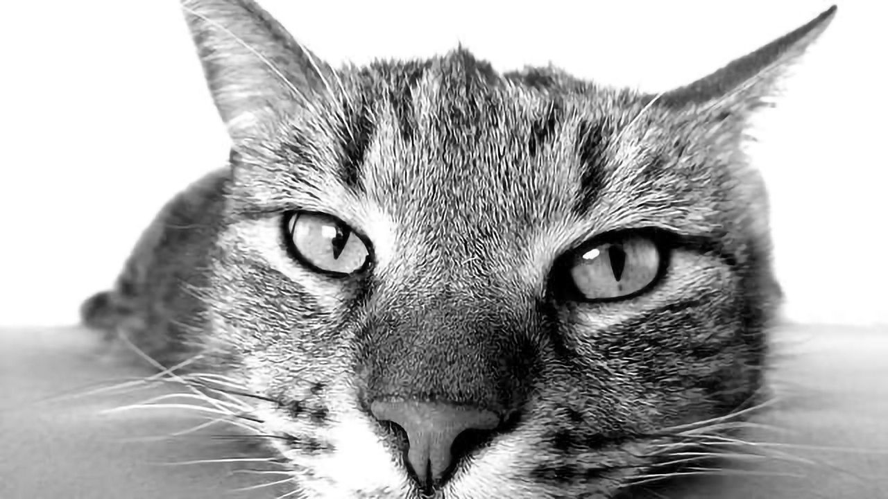 Cat Parasite Could Help Your Business Brain