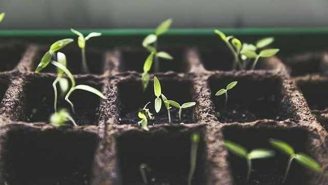 Fertilising May Increase Disease Susceptibility