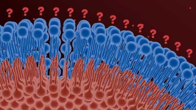 Lipidomics in Biotech and Pharma: Farther than Fat
