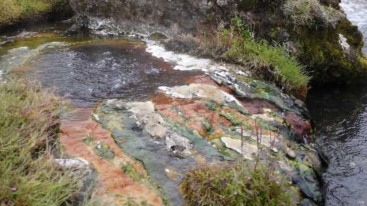 Do Bacteria Ever Go Extinct? Absolutely!