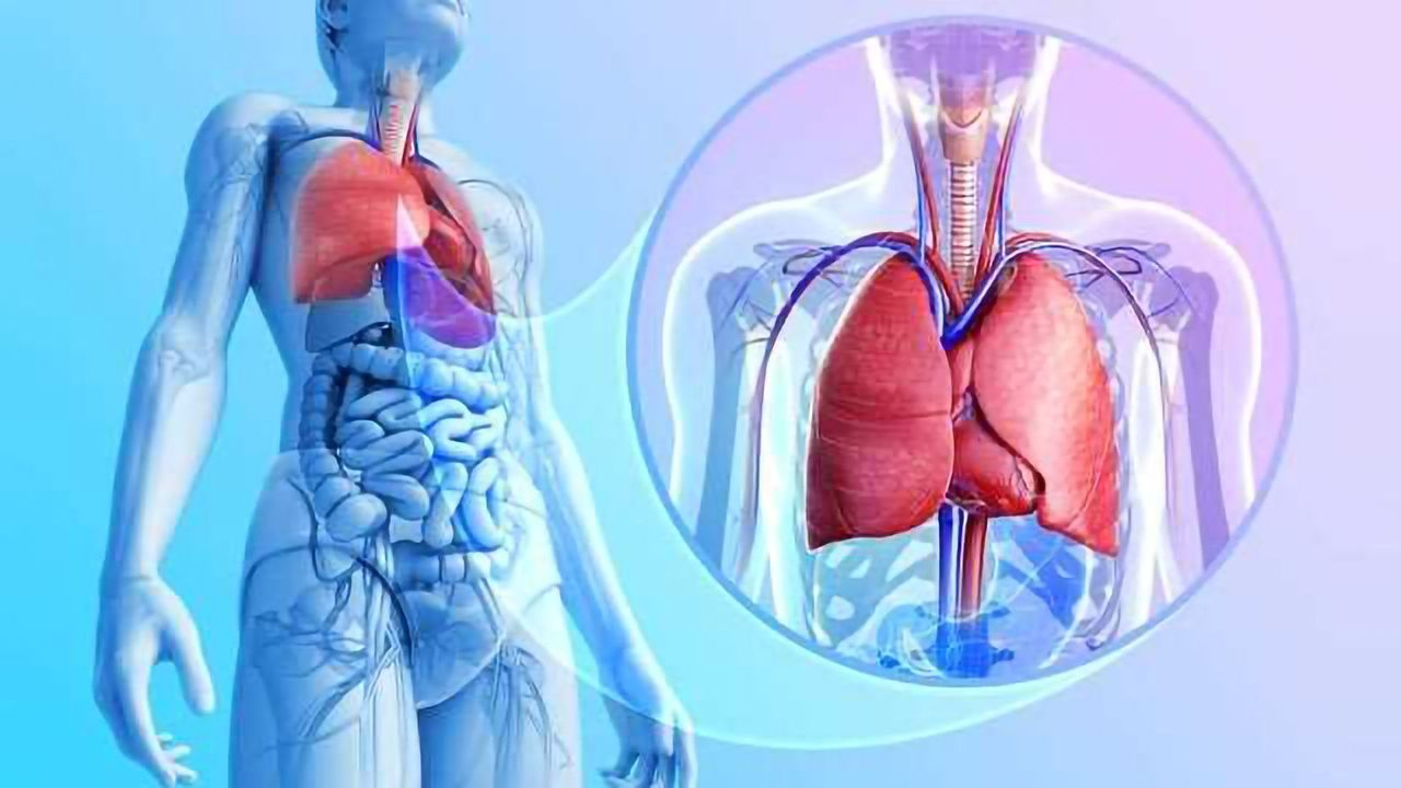 In Vitro Systems and Inhalation Toxicology