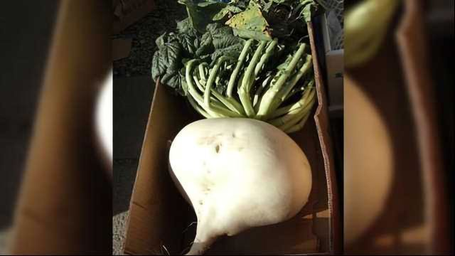 Compounds in 'Monster' Radish Could Help Prevent Heart Disease & Stroke