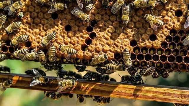 Environmental Monitoring Using Honeybees