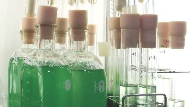 Enzyme Could Provide Biofuel Boost