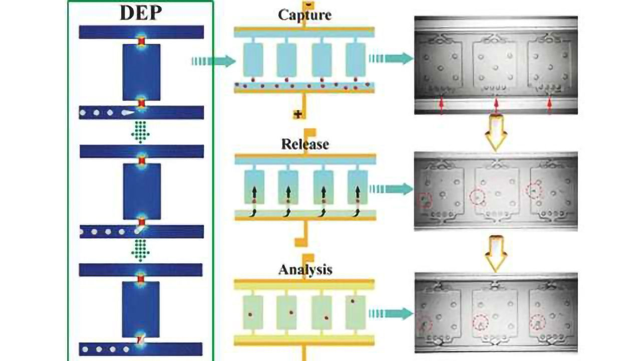Progress Toward Personalized Medicine: Microfluidic Chip for Analysis of Single Cells