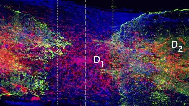 Study Provides an Early Recipe for Rewiring Spinal Cords