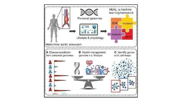 HEAL Helps Detect Heritable Disease Risk