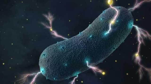 Gut Bacteria's Shocking Secret