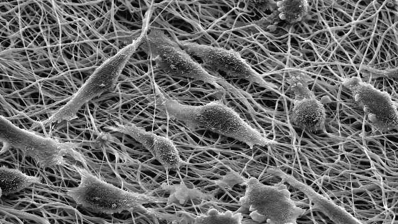 Genetic Pathway Disruption Rejuvenates Cells