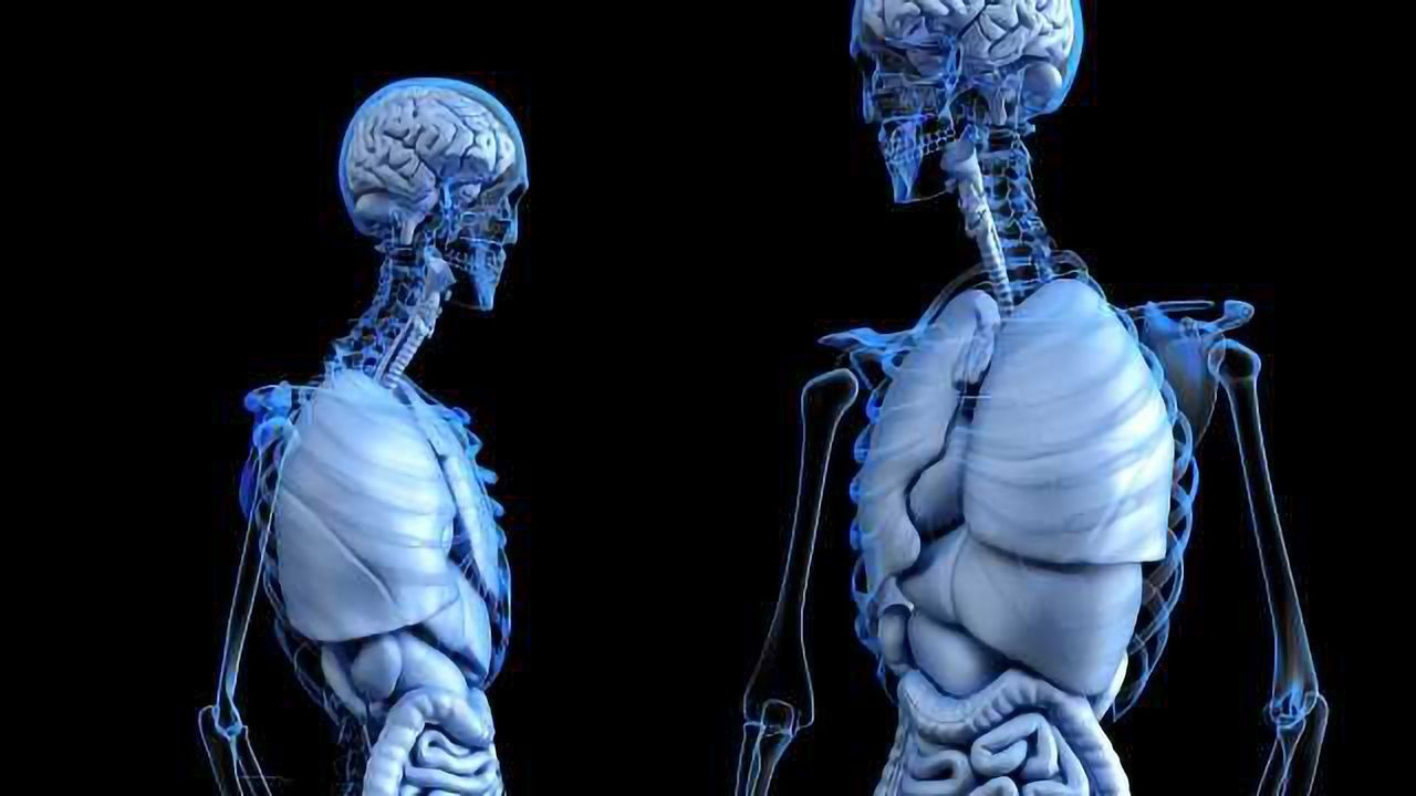 Brain's Lymphatic Vessels as New Avenue to Treat Multiple Sclerosis