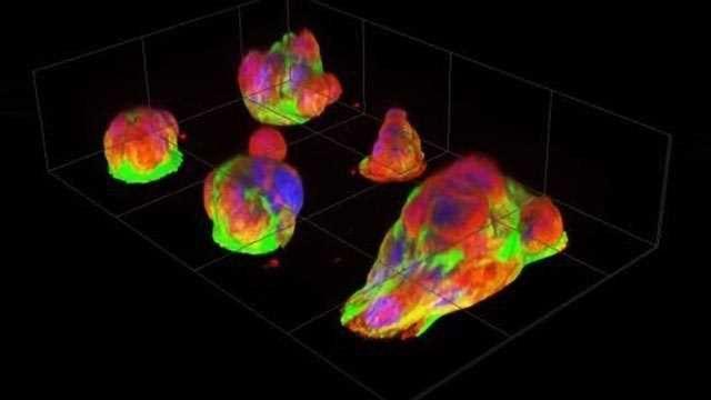 Observing Cancer Cell Behavior