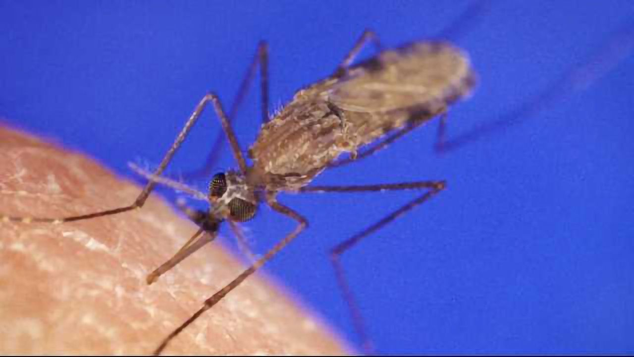 'Gene Drive' Technology Wipes Out Lab Mosquitoes