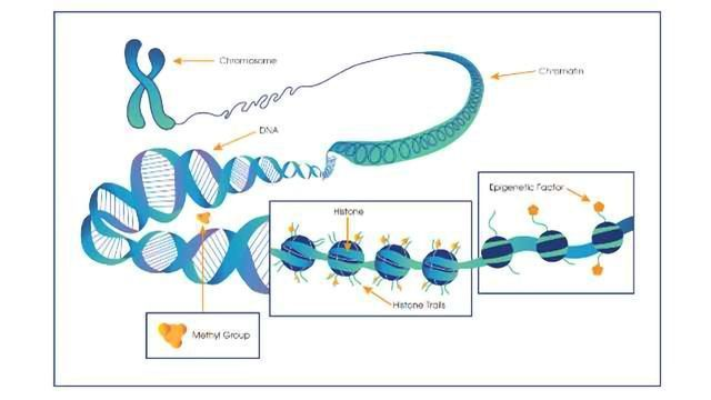 Above the Genome: How Epigenetics Influences Cancer and Obesity