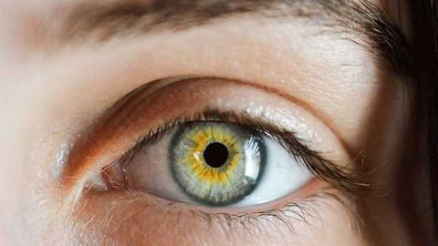 Structural Insights on Eye Membrane May Improve Corneal Transplants