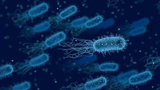Intoxicating Chaperonins Key for Uptake of Clostridium difficile
