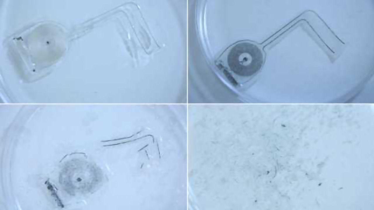 Implantable, Biodegradable Electrodes Speed Up Neural Regeneration