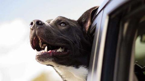 Retina Restoration Could Return Vision to Our Canine Friends