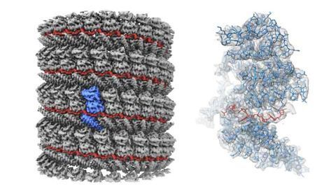 Clearest Ever Image of Ebola Virus Protein