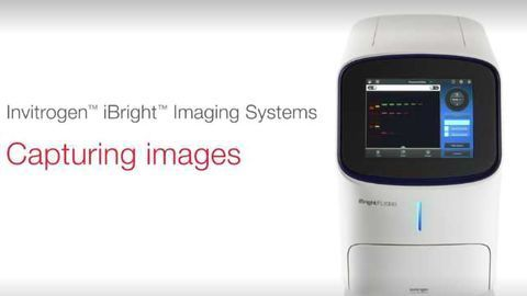 How to Capture Images with Invitrogen iBright Imaging Systems