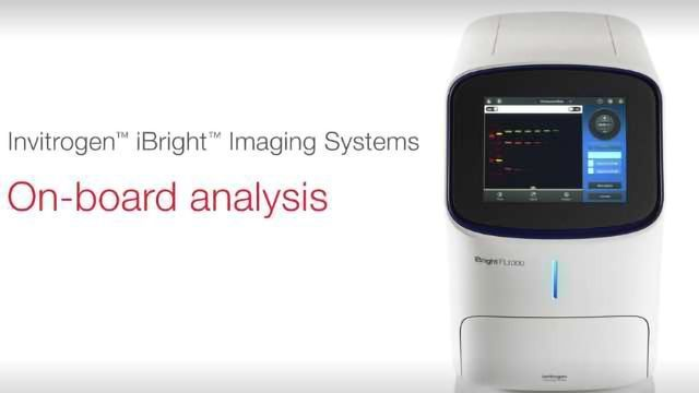 How to Analyze Images with Invitrogen iBright Imaging Systems
