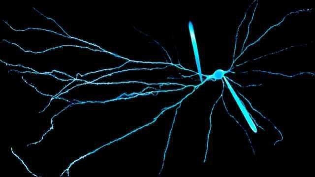 The Electric Signals That Make the Human Brain Unique