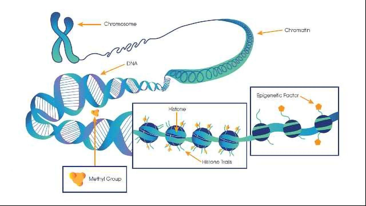 How the Brain's Epigenetic Factors Change in Alzheimer's