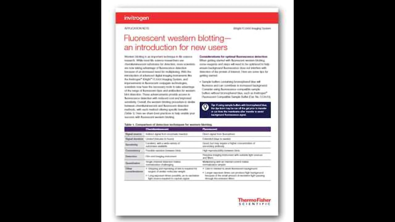Fluorescent Western Blotting — An Introduction for New Users