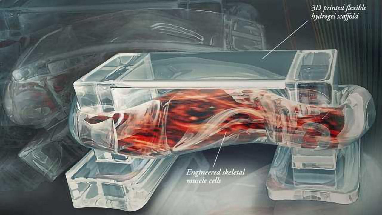Novel Quantum Dots Enhance Cell Imaging