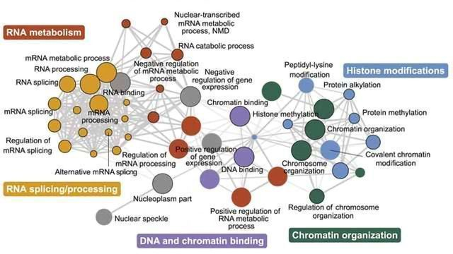 Study Pinpoints Autism Linked Protein >> Genetic Network Linked To Autism Technology Networks