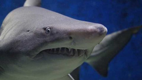 What do Metastatic Cancer Cells and Sharks Have in Common?