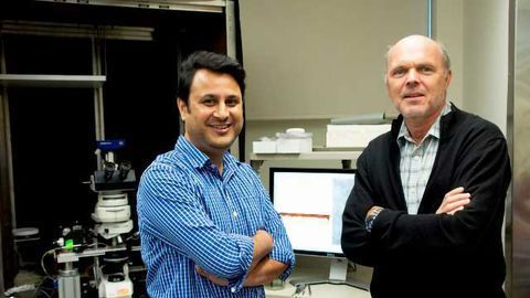 Solution to 125-Year-Old Neuroscience Mystery Provides Clues to Epilepsy Treatment