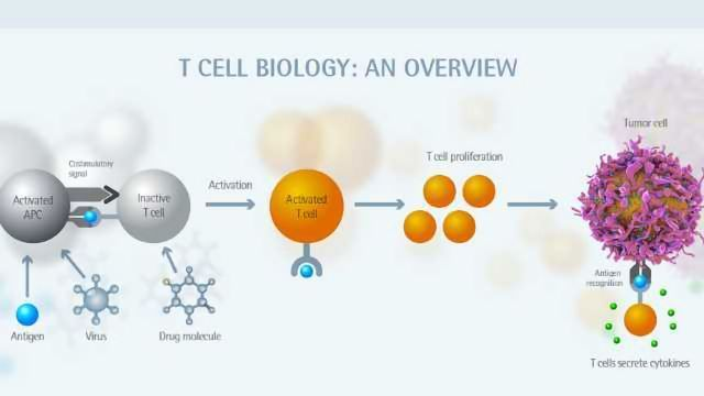 Enhancing Immune Cell Characterization
