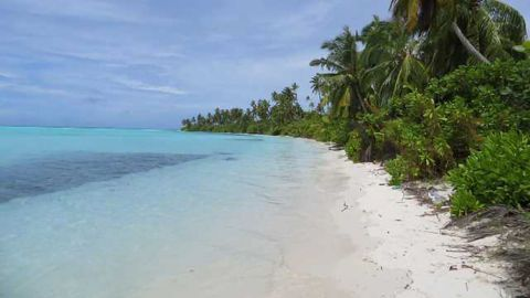 Rising Sea Levels May Build, Not Destroy, Coral Reef Islands