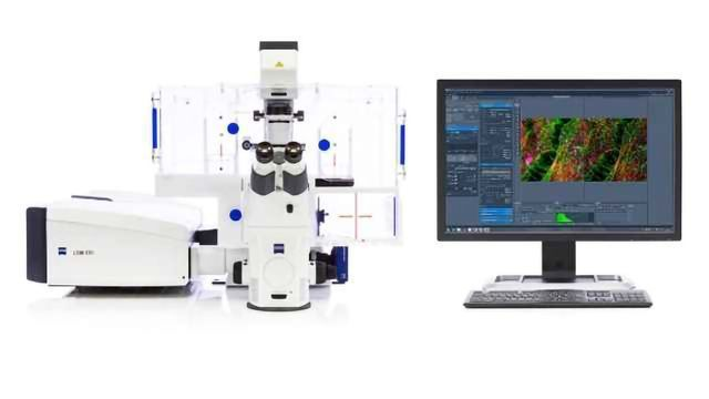 Leveraging ZEISS Airyscan to Integrate subcellular and Structural Detail with Inscopix Functional Neural Network Data