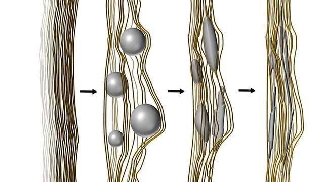 Skeletal Imitation Reveals Bone Mineralization in Fine Detail