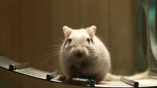 Protein Therapy Boosts Spinal Cord Regeneration in Mice
