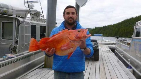 Mercury Challenging for Fish Detox