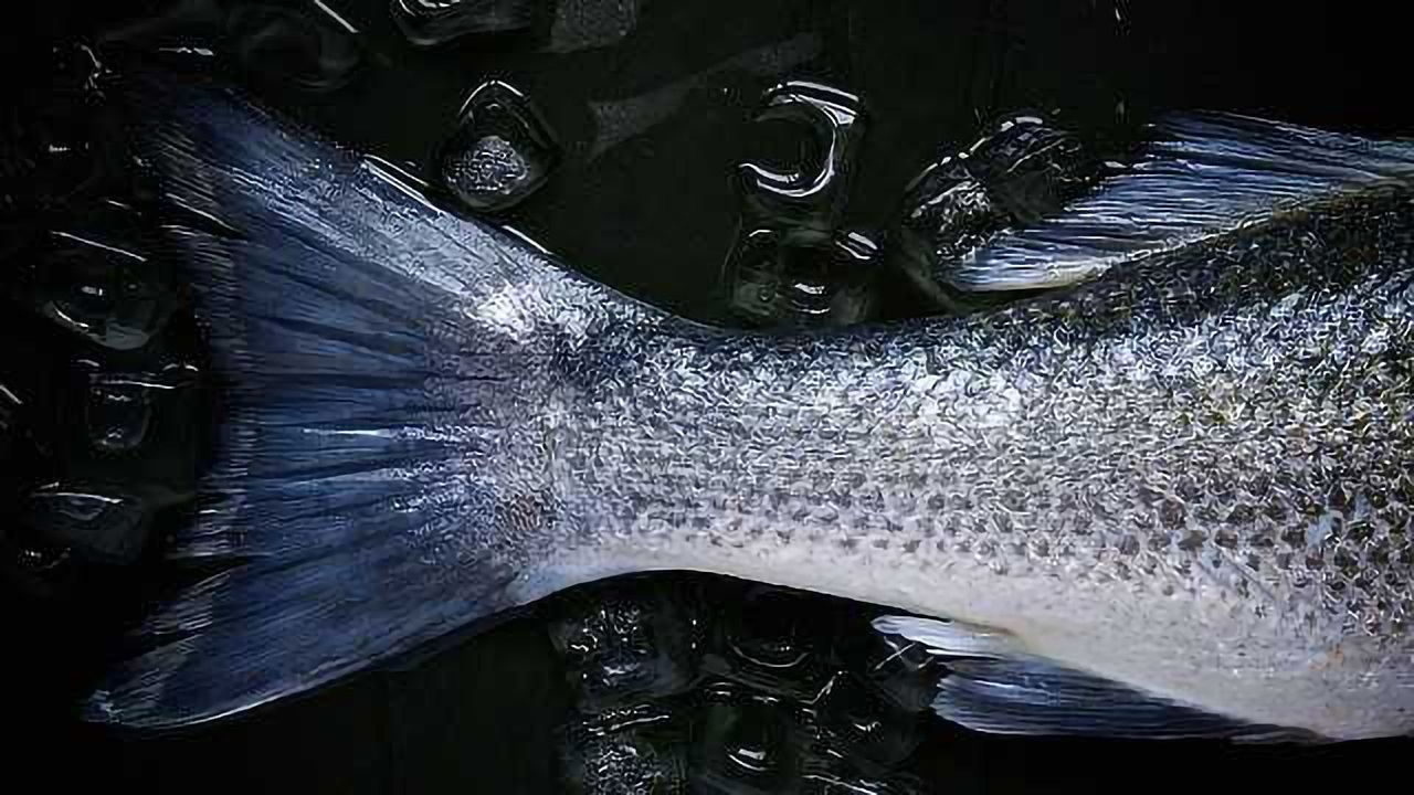Hope for Fish Allergy Sufferers