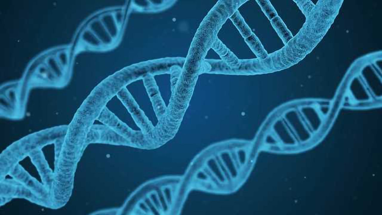 Mutations Catalogued for Stem and Progenitor Cells