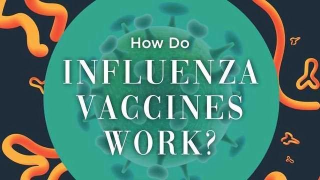 How Do Flu Vaccines Work?