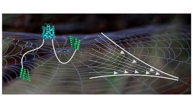 Molecular Insights into Spider Silk
