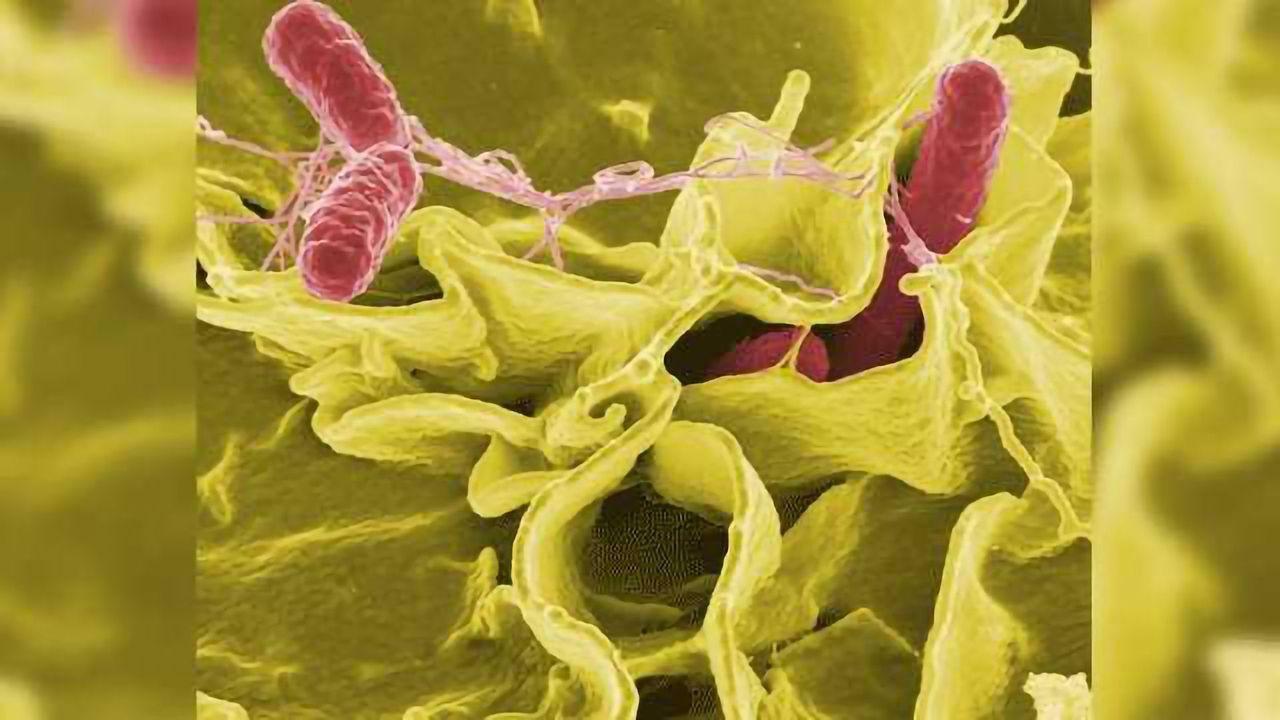 Bacterial 'Sleeper Cells' Evade Antibiotics and Weaken Defence Against Infection